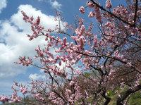 これぞ春。